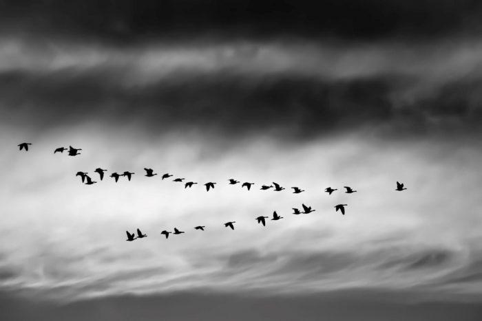 Migration-VDP